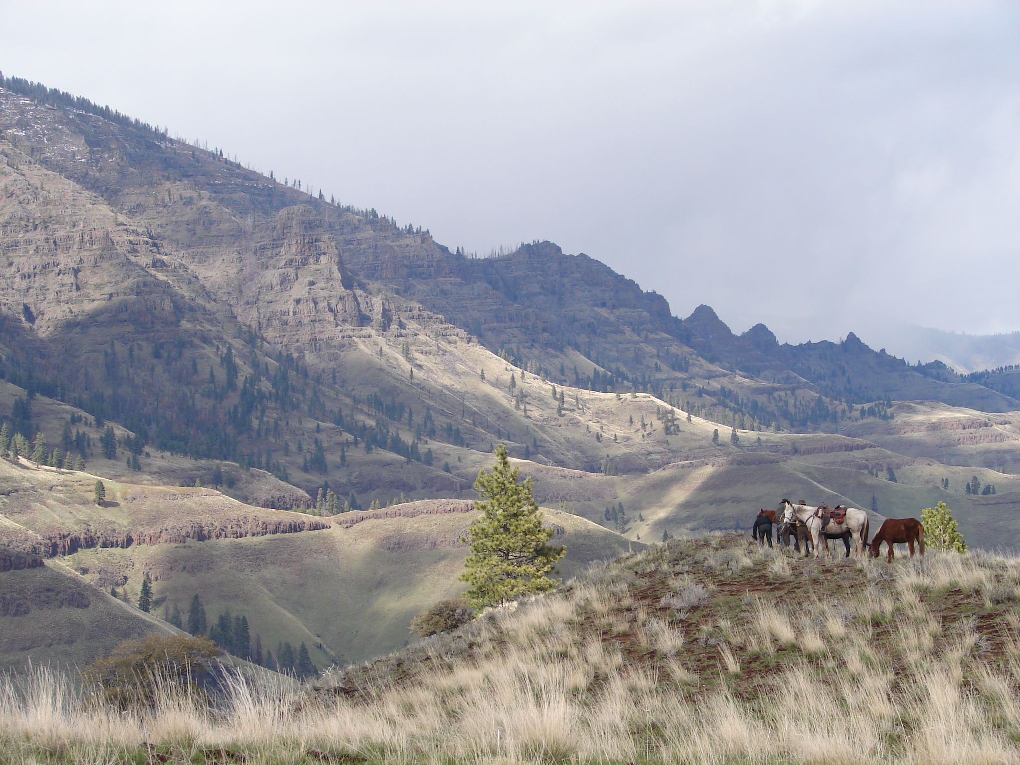 Image of mountain grassland bench with horses and riders