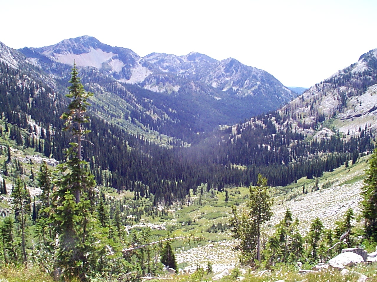 Glacial Valley with  Trees