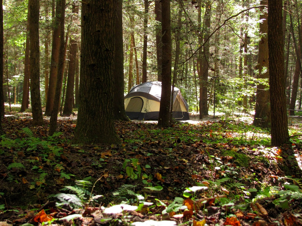tent nestled in forest at DeSoto Campground