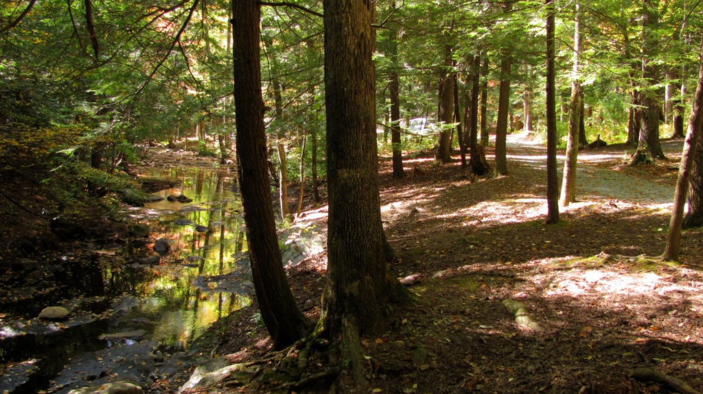 Mill Creek runs through Hickey Gap Campground amidst old growth Hemlock trees