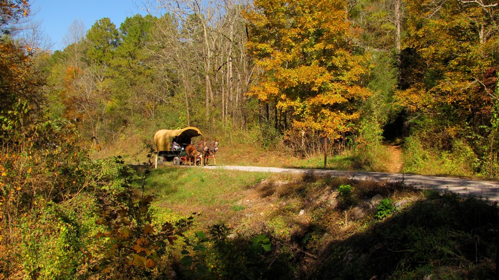Horse-drawn buggy coming up road, on a beautiful fall day, to Cottonwood Patch campground
