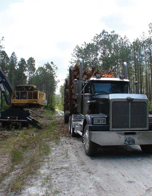 Logging truck loading logs in the forest