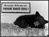[Photo] Smokey Bear as a cub, sleeping under a sign that says