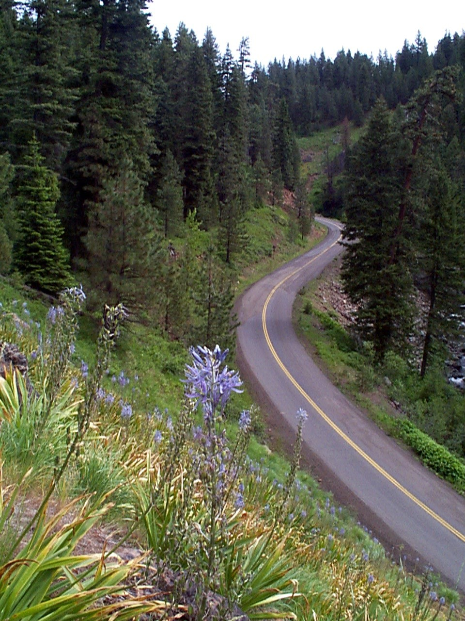 Forest Road 39 on the Hells Canyon Byway with blue camas flowers in foreground
