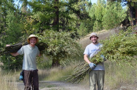 Students from Whitman College preparing to plant willows in Gimlet Creek