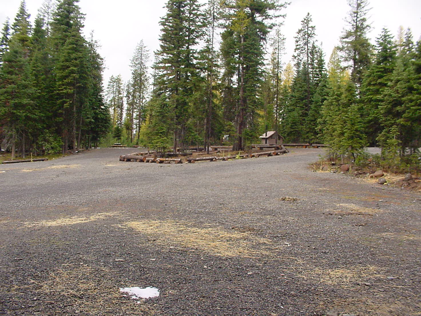 Large parking area in pine forest at Buck Creek Forest Camp