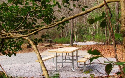 Landing photo for picnicking. Two secluded picnic areas can be seen through the evergreen foliage of an American Holly Tree at Mulky Campground.