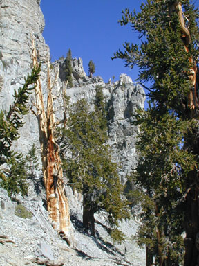 [Photo] Mt. Charleston Wilderness