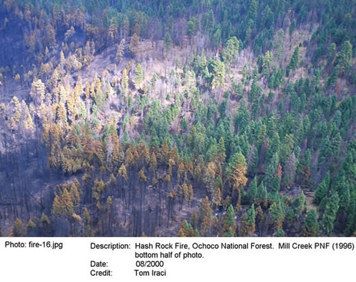 Aerial image of burned and green trees.