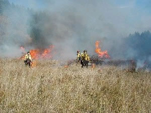 Image of three fire fighters burning a tall grass meadow.