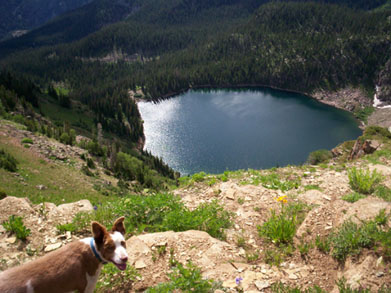 Image of dog overlooking a lake in the Flat Tops Wilderness.