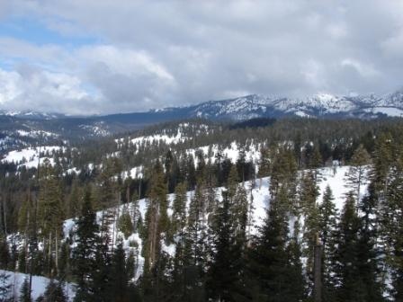 Snowy mountain with pine trees in foreground