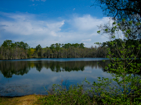 Located 8 Miles West Of Tallahassee On State Highway 20, Silver Lake Is The  Largest Recreation Area In The Apalachicola National Forest.