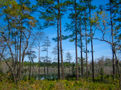 Bonnet Pond, Trail Of Lakes. Floridau0027s Largest National Forest, The  Apalachicola ...