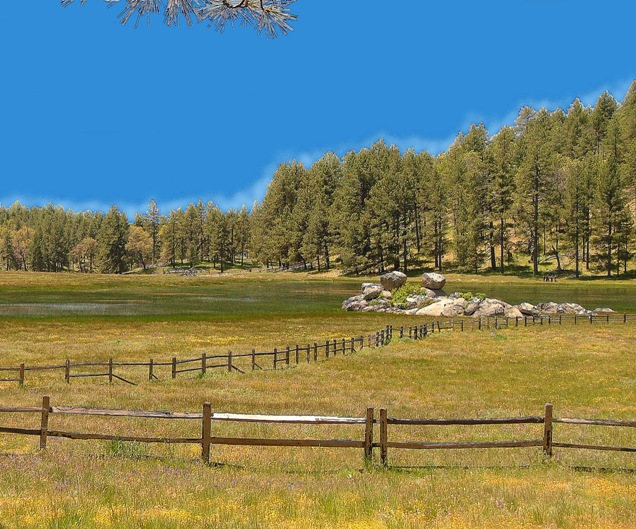 A meadow with split rail fence surrounded by pines.