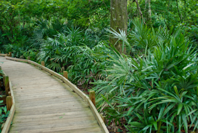 Juniper Springs Nature Trail