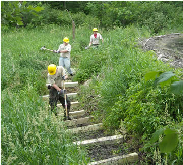 Employees working on trail