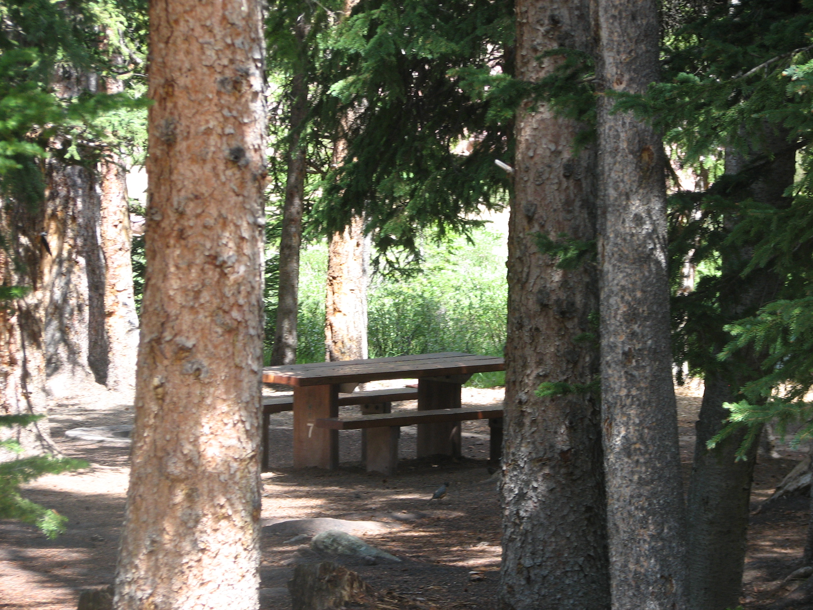 Photo of a site at the Spirit Lake Campground.