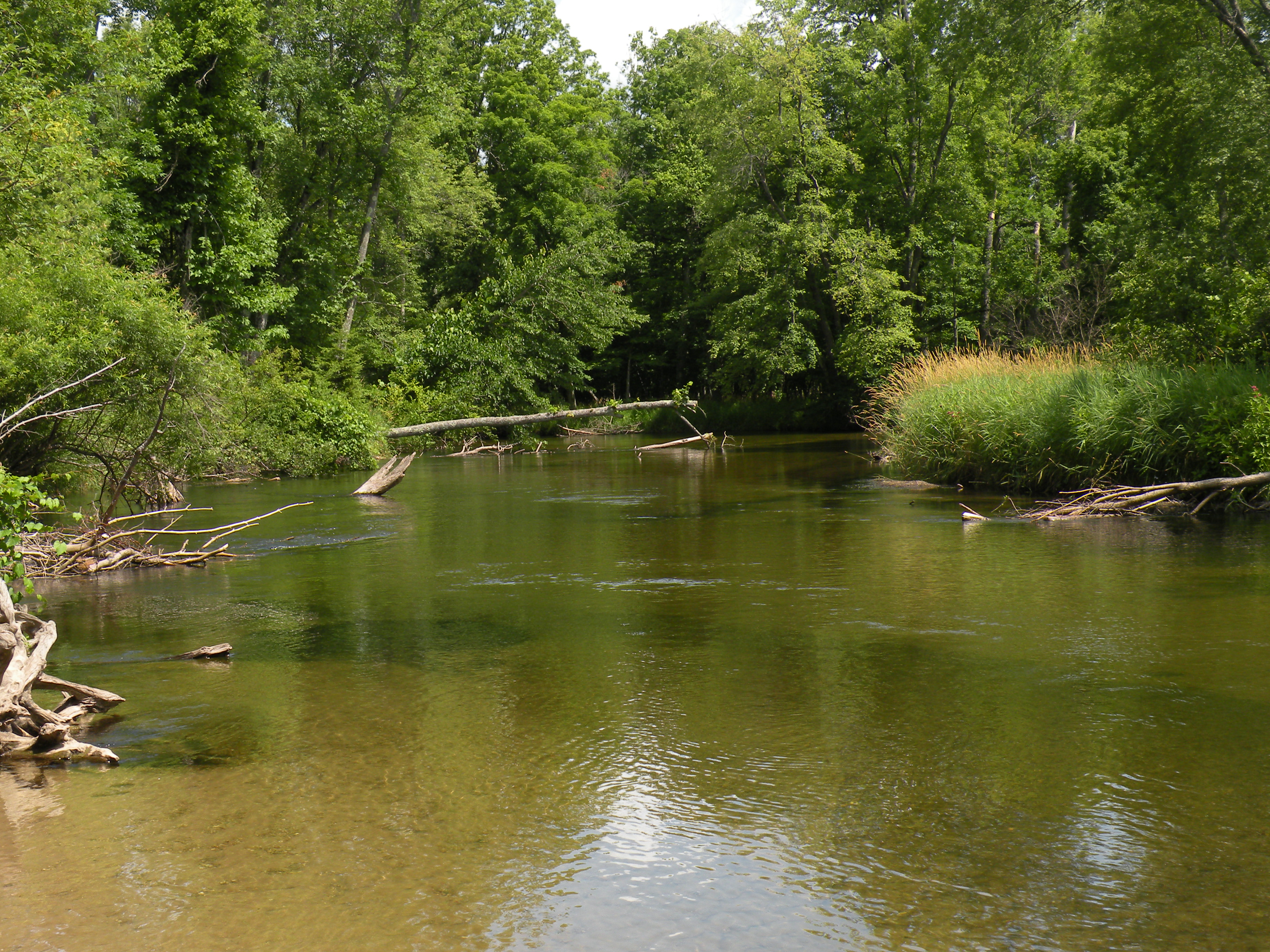 Pere Marquette National Scenic River - near Bowman Bridge Day Use Area