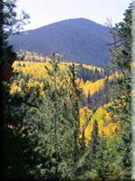 [photo] Fall colors on the San Francisco Peaks