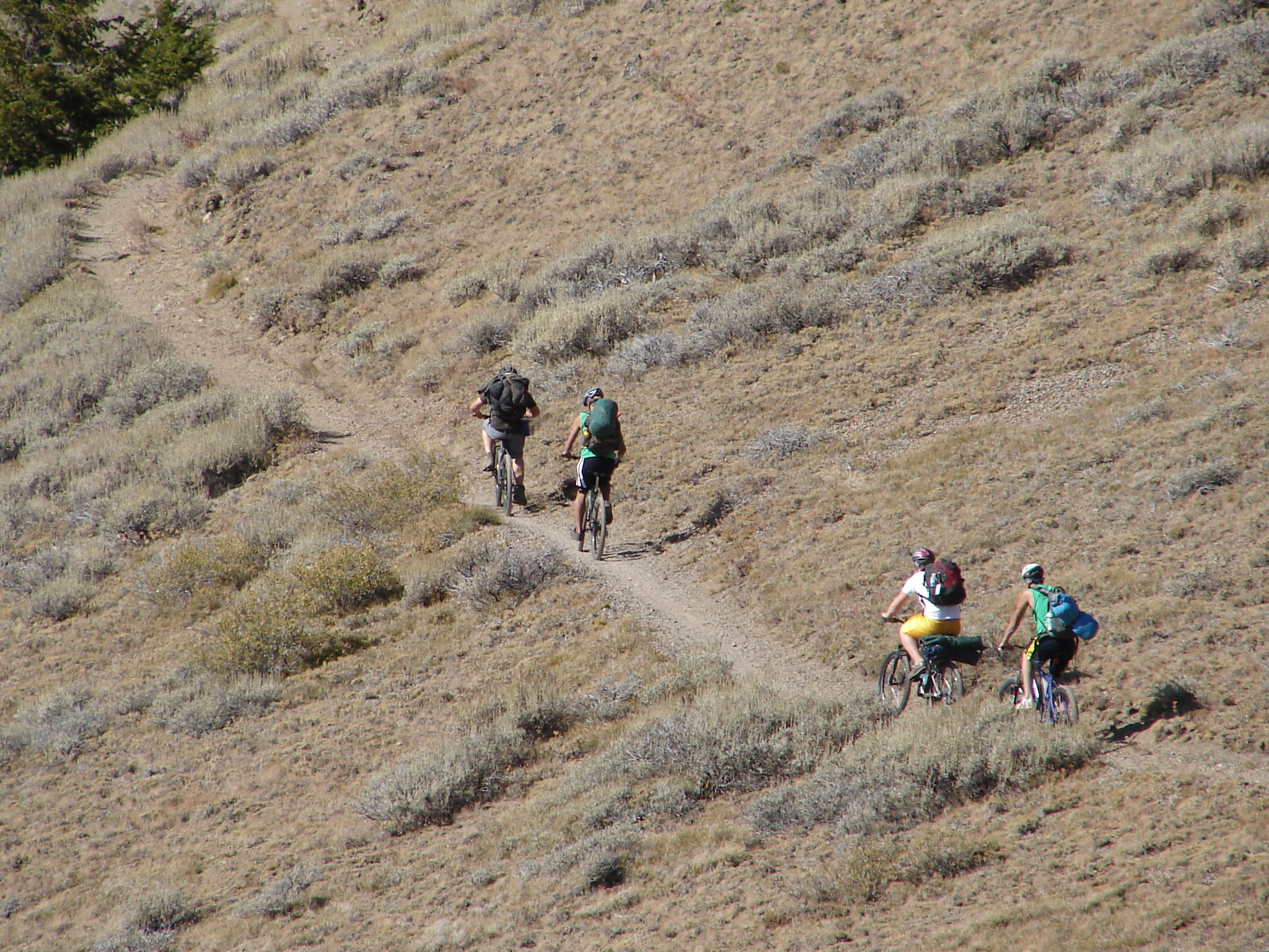 4 people riding mountain bikes on a trail