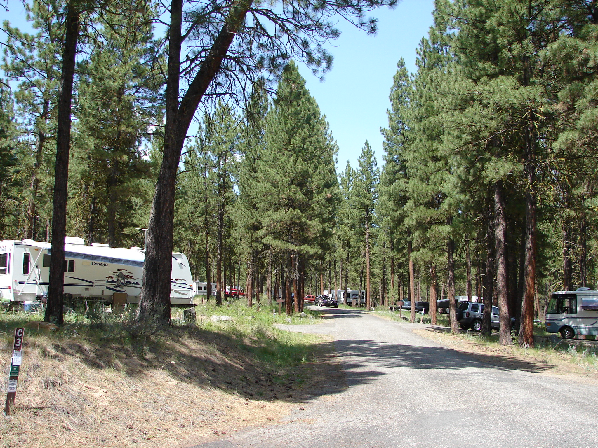RV parked in open pine forest at Union Creek Campground