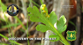 Image of moonwort with text
