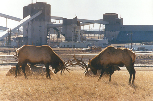 TB elk with Black Thunder mine in background