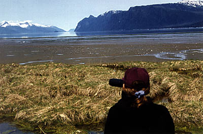 A birdwatcher views shorebirds on the Stikine River Delta