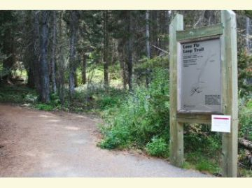 Lone Fir Campground Loop Trail
