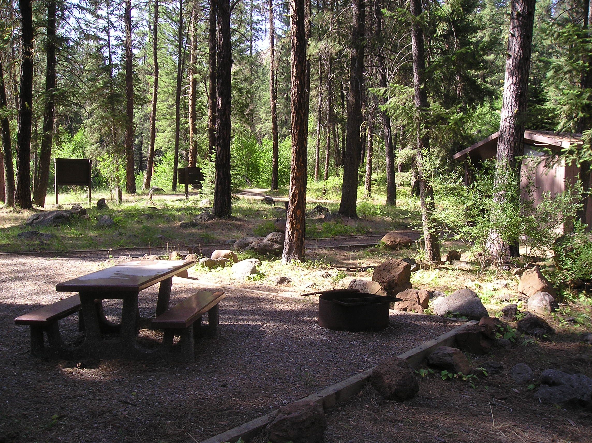 Picnic table and campiste in pine tree forest in Eagle Forks Campground