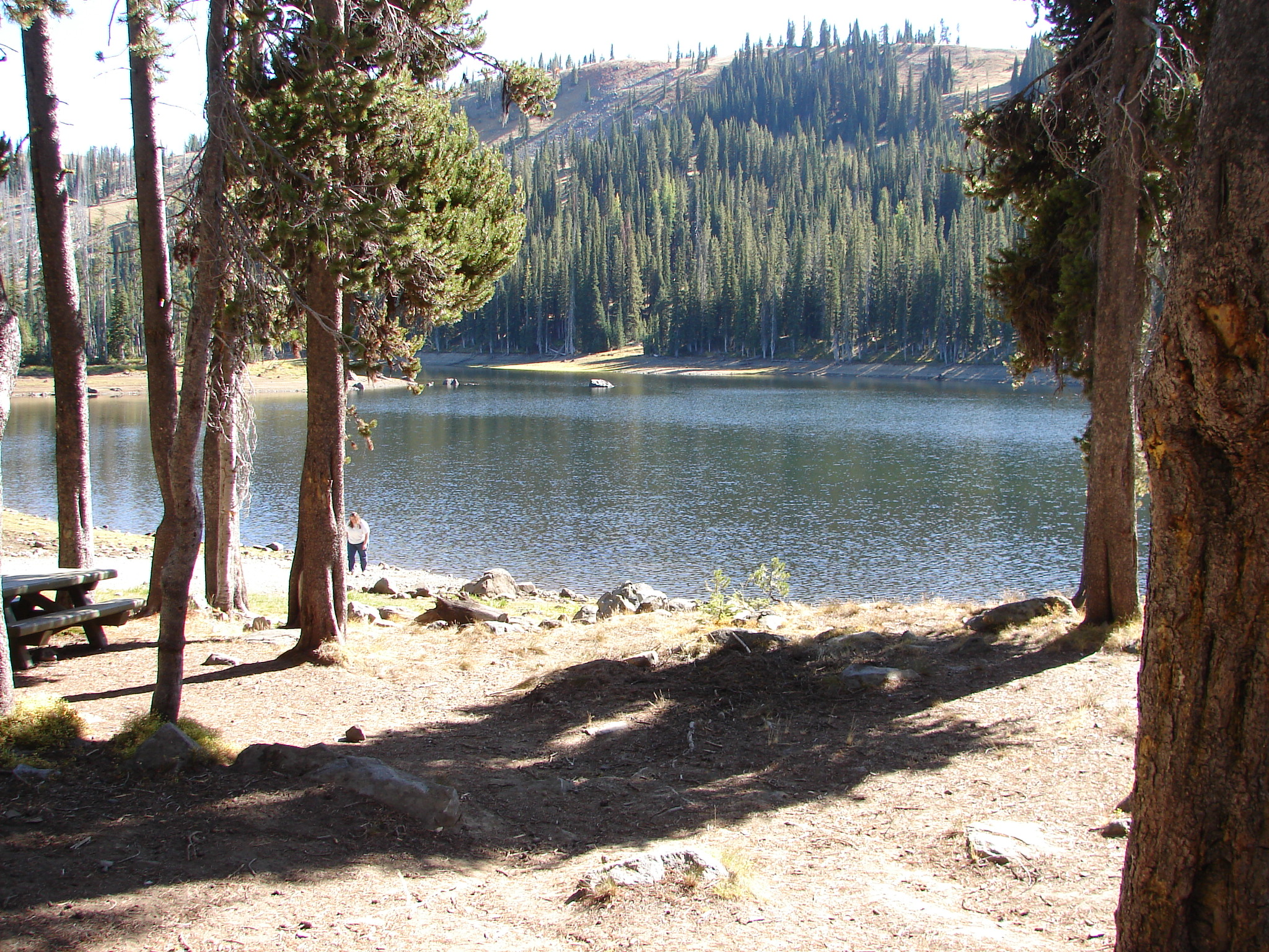 Hihg mountain Fish Lake surrounded by pine trees