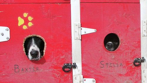 image of dogs in kennels looking out