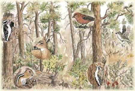 Deschutes National Forest - Nature & Science
