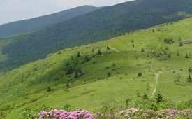 View of Roan Mountain Highlands in Cherokee & Pisgah National Forests