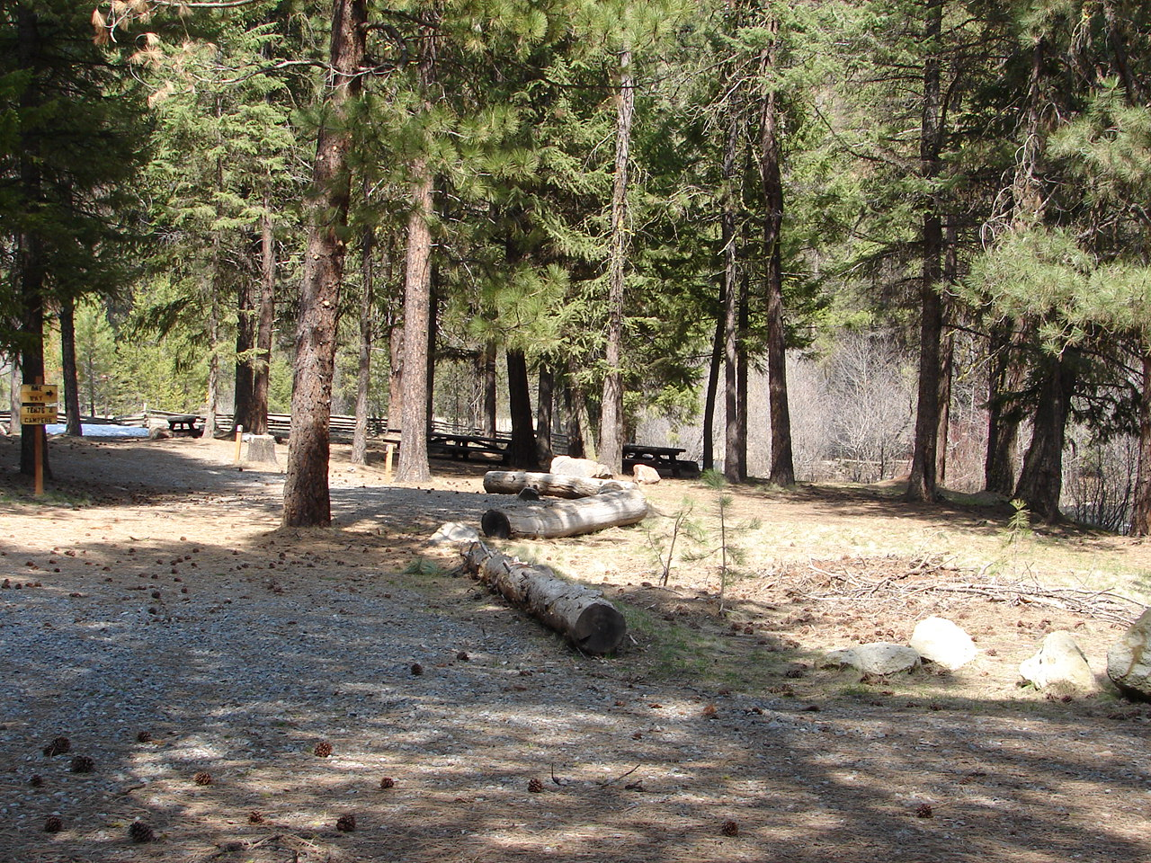 Forest campground in the pine trees
