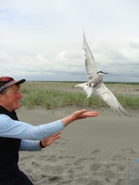 A person releases a tern against a backdrop of sand and grass