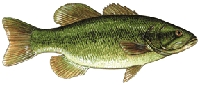 Warmwater Fish