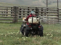 Photo of a person on an ATV spraying for weeds.
