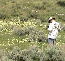 Photo of a man standing in an area with sagebrush, grasses and noxious weeds.