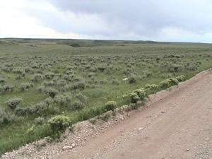 Photo of noxious weeds along a road.