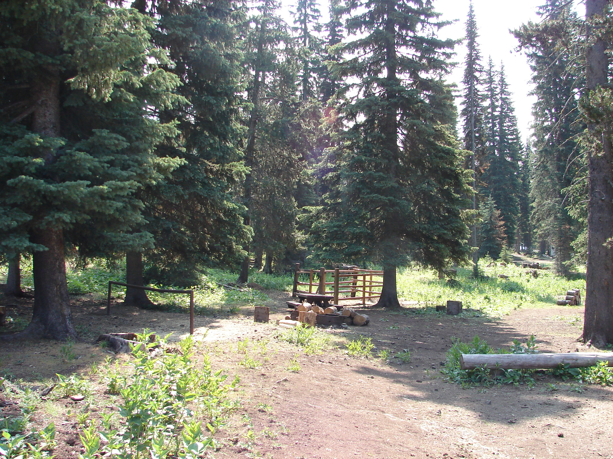 Horse corrals and campsite in pine and fir trees