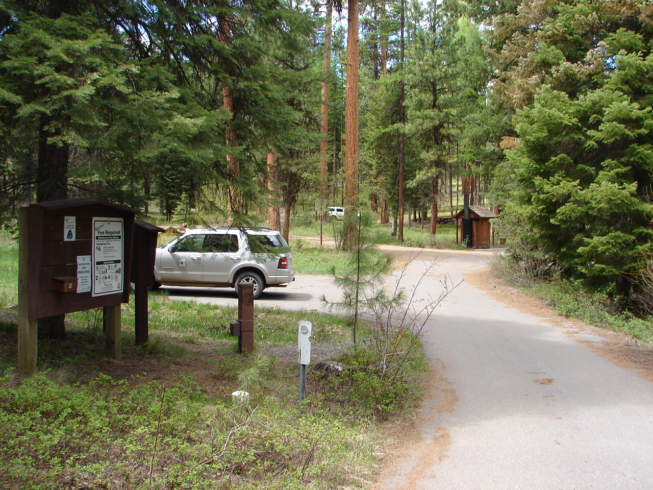 Campground with large ponderosa pine trres and a car parked in a campsite