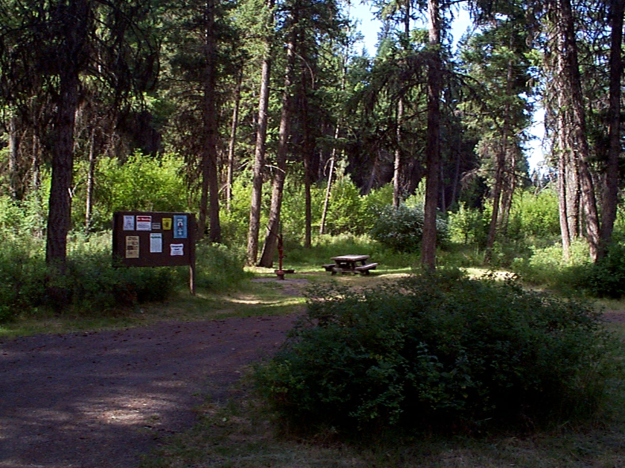 Forested campground with pine and fir trees above picnic table