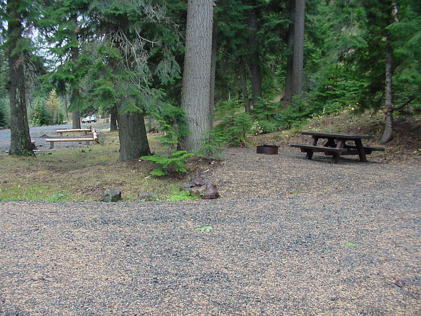 Forested campsite in the pine trees