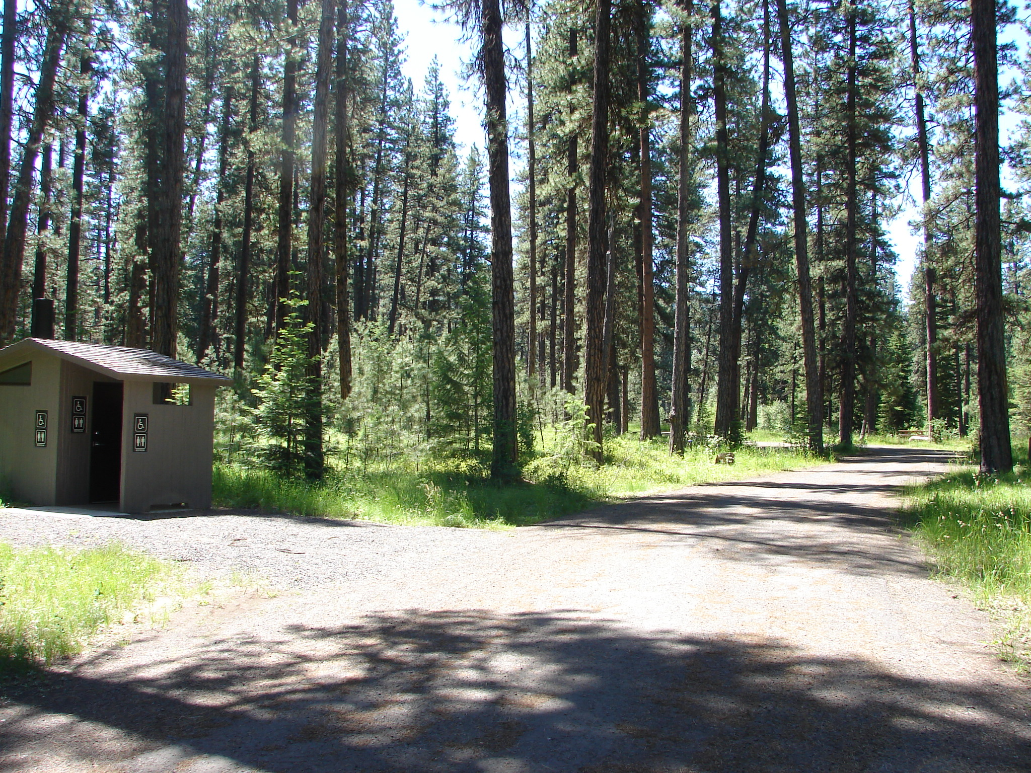 Forest campground under large ponderosa pine trees