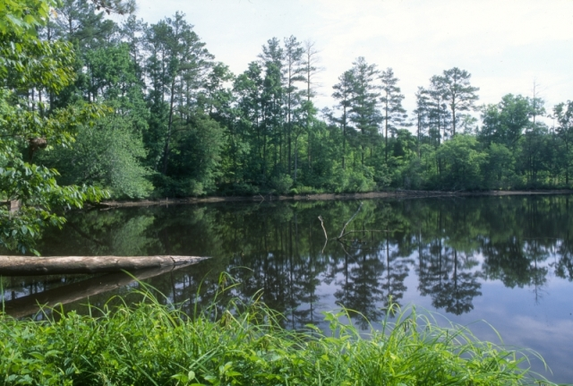 Mill Pond on the Uwharrie NF