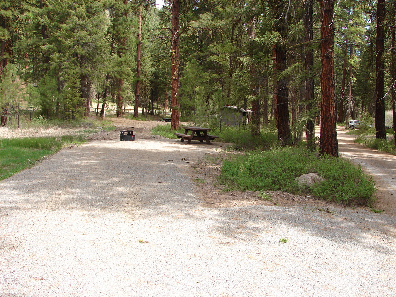 Camping site with table and firering in a pine forest