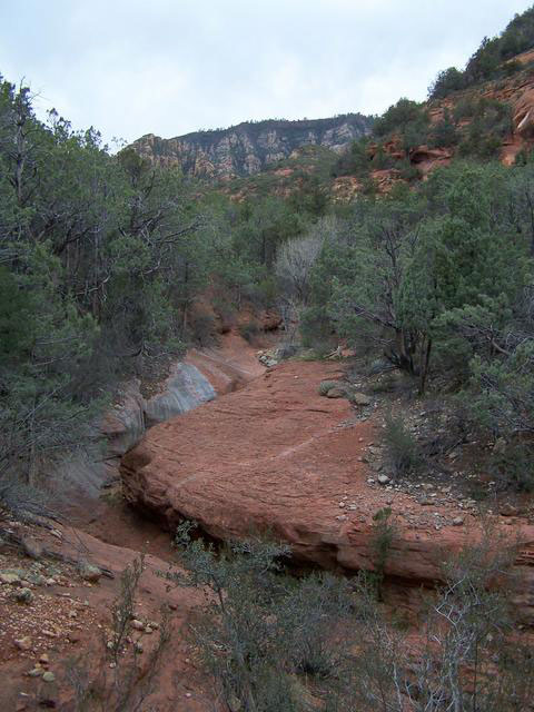 View of creekbed on the Bear Sign Trail. Photo courtesy of Deborah Lee Soltesz.
