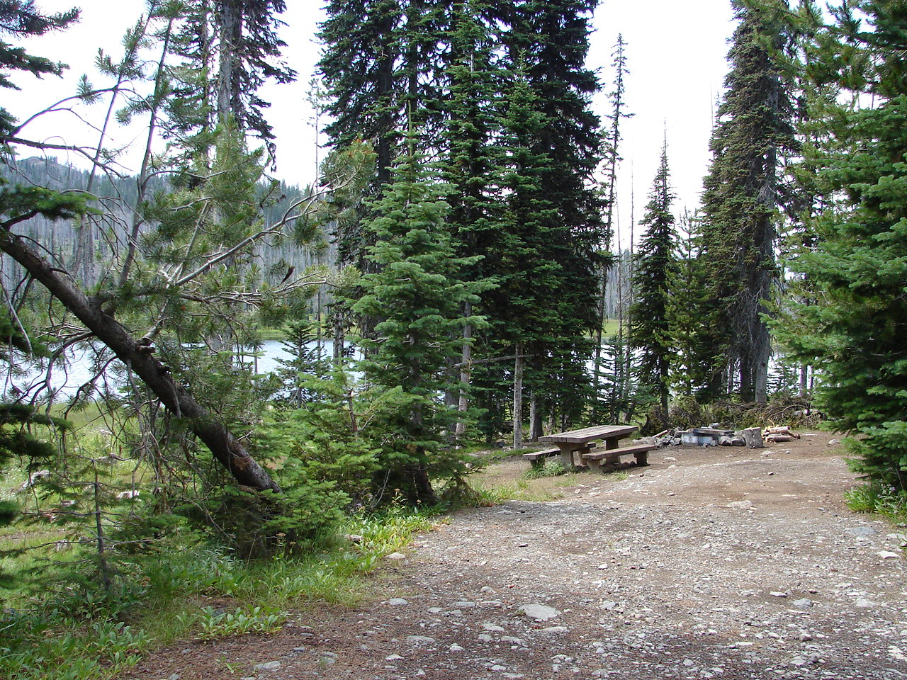 Forest campsite with lake in background